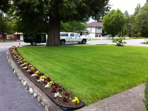 nice lawn2